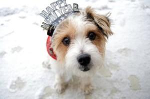 dog-happy-new-year-331x220